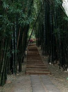 bamboo along path | Copyright 2016 Patricia Belleno